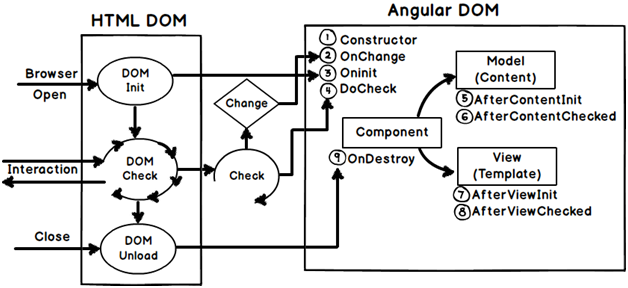 Angular Component Life Cycle Diagram Created During Training In